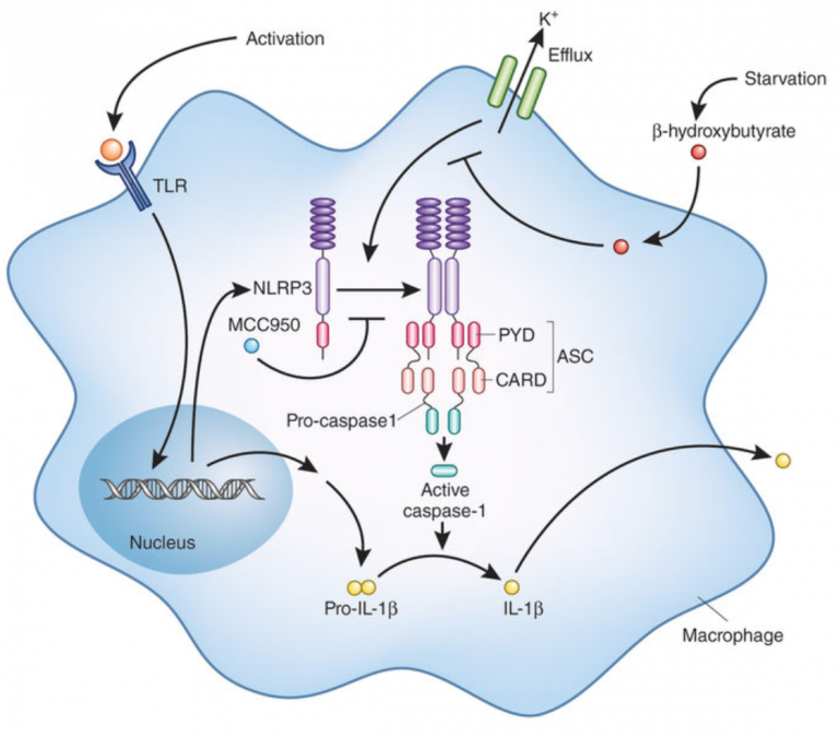 Taming the inflammasome (Nature Medicine)