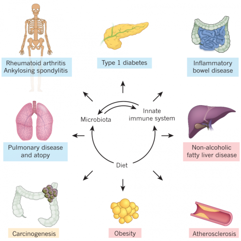 The microbiome and innate immunity (Nature)