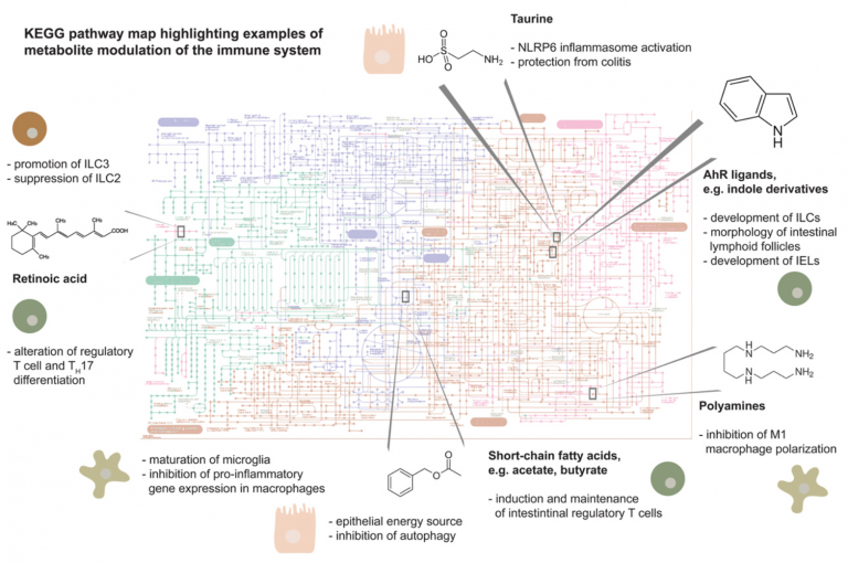Metabolites: messengers between the microbiota and the immune system (Genes and Development)