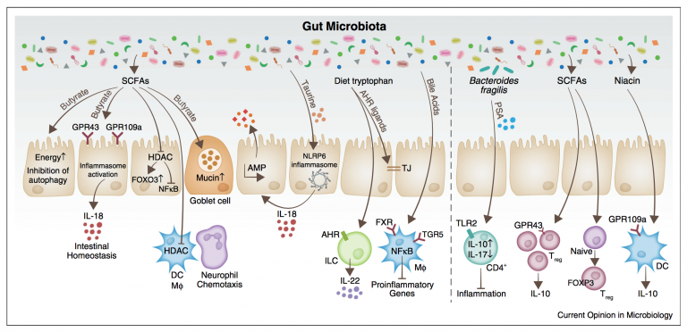 Microbiome, metabolites and host immunity (Current Opinion in Microbiology)