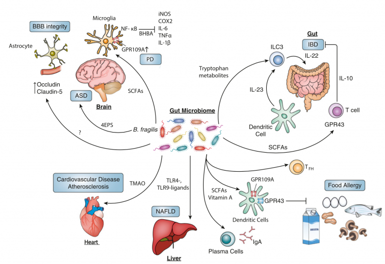Microbiome-Modulated Metabolites at the Interface of Host Immunity (Journal of Immunology)