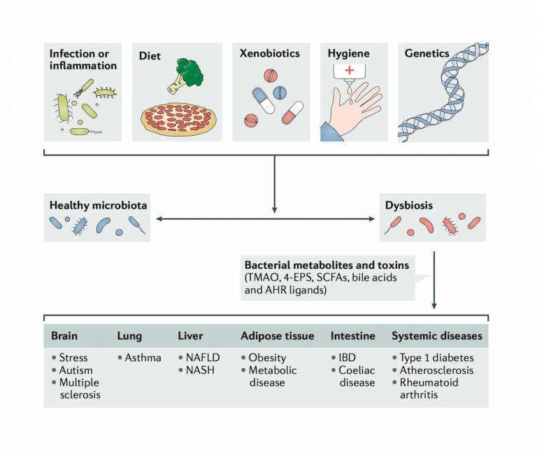 Dysbiosis and the immune system (Nature Reviews Immunology)