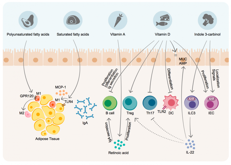 The Role of the Immune System in Metabolic Health and Disease (Cell Metabolism)